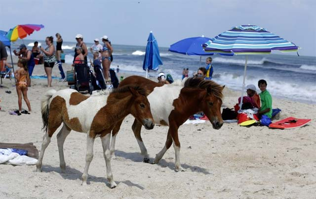 Ocean City Wildlife