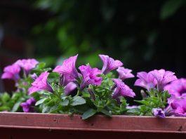 Maintain Flowers