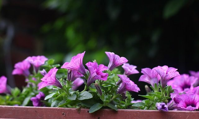 5 quick and easy diy projects for Plants that are easy to maintain