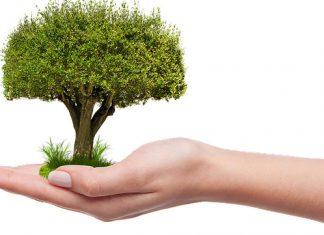 evaluate trees health